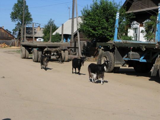Kozy Ust-Barguzin