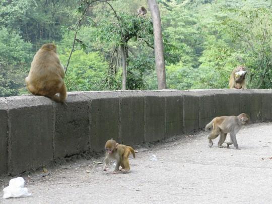 Malpy w Parku Qianling
