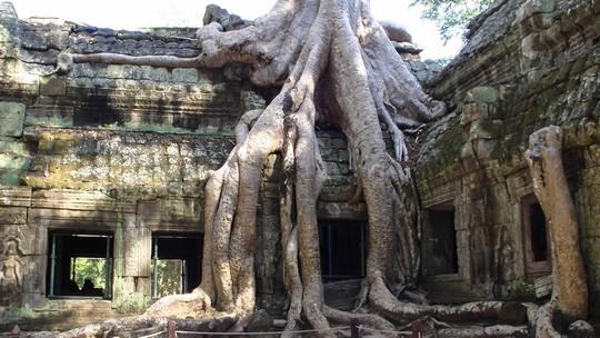 Drzewa Ta Prohm