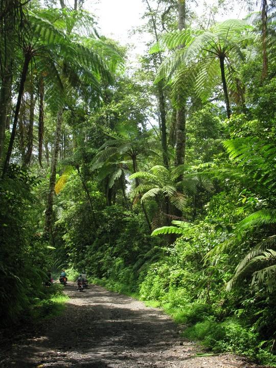Droga przez dżunglę