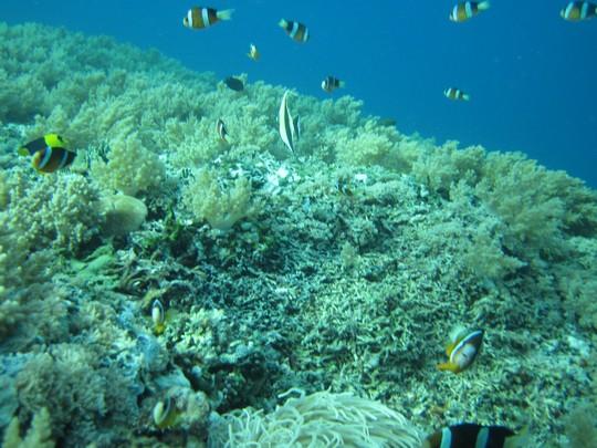 Snorkeling na Gili