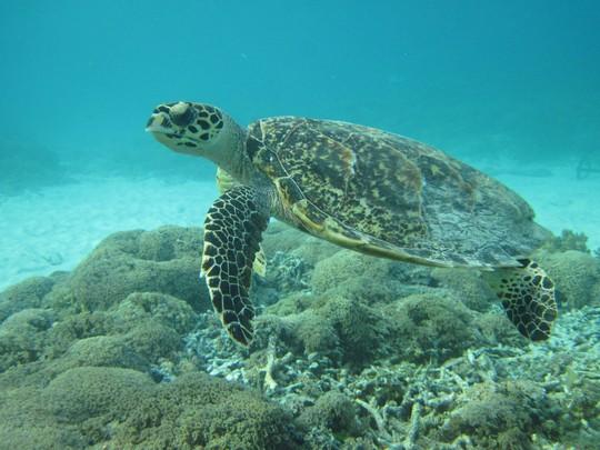 Żółwie na Gili