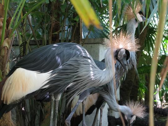 Ptaszynki