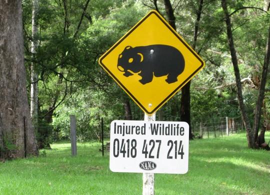 Znak z wombatem