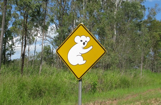 Znak z koalą
