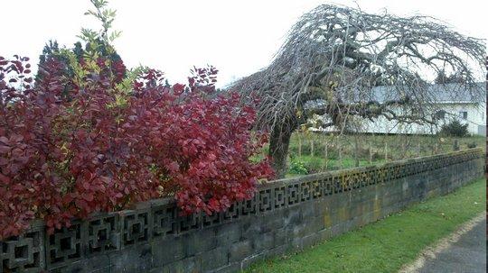 Jesień w NZ