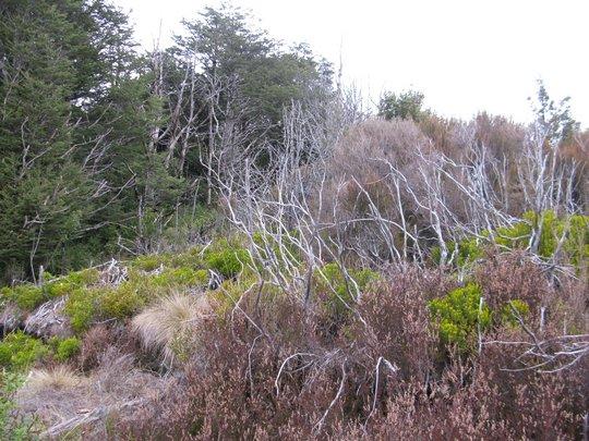 Roślinność Taranaki