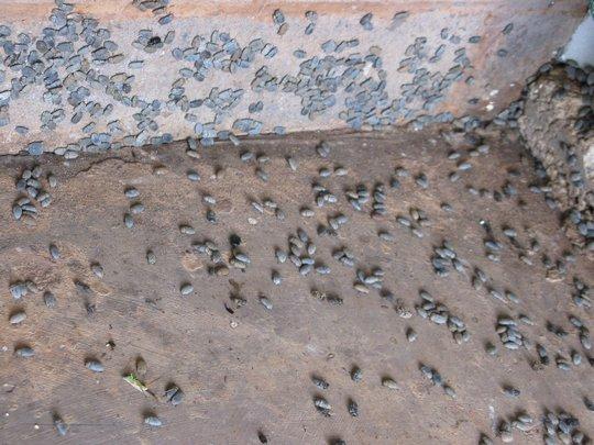 Owady w australijskim outbacku
