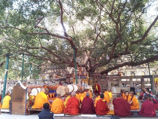 drzewo_bodh_gaya